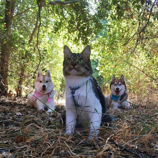 رزی گربه ای که تصور می کند یک سگ شجاع است