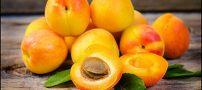 زرد آلو درمان کننده یبوست و ضامن سلامت قلب