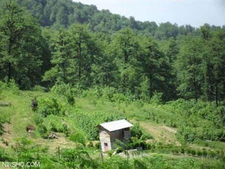 لذت گردشگری با سفر به جنگل دالخانی در رامسر مازندران