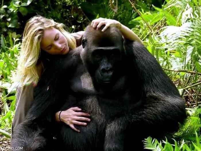 رابطه عاشقانه و هم آغوشی زن زیبا و پولدار با گوریل