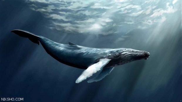 بازی نهنگ آبی چیست؟ چالشی به سوی مرگ