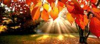 خصوصیات مردان و زنان متولد فصل پاییز