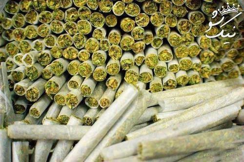 گل گیاه مخدری که به شدت اعتیاد آور است