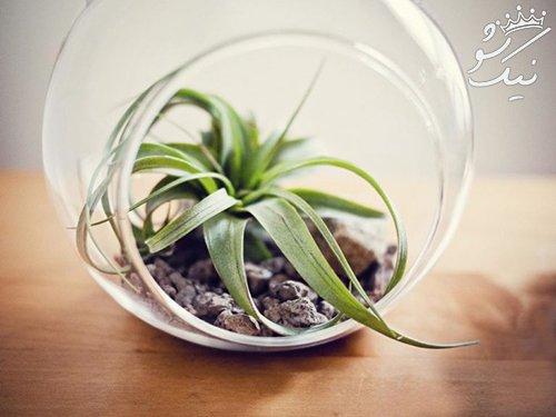 معرفی زیباترین گل و گیاه های تزیینی برای محل کار