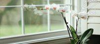 معرفی بهترین گل های خانگی برای منزل شما