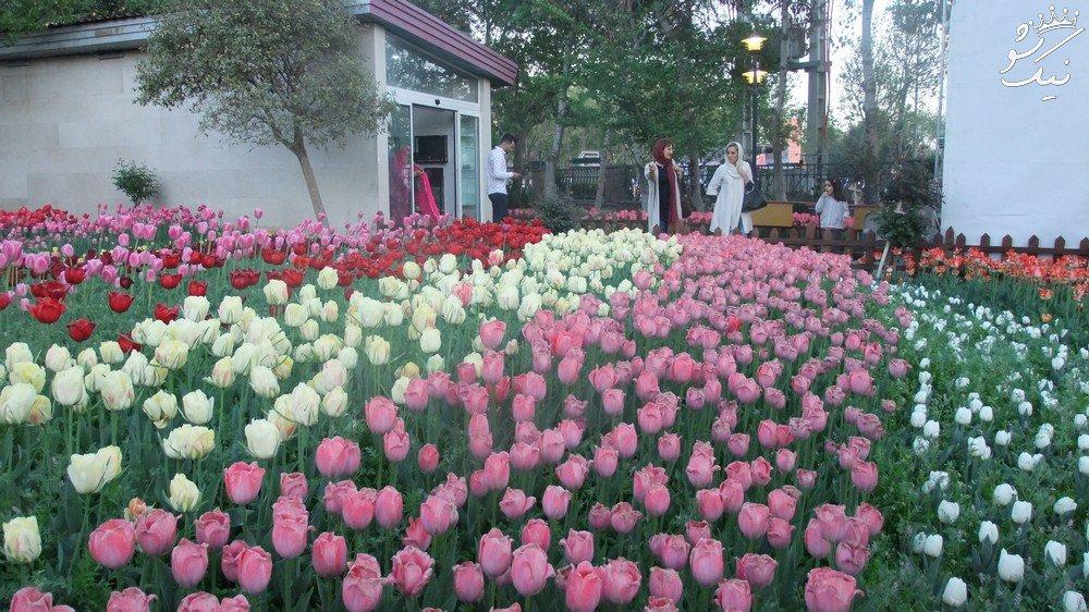 جشنواره بی نظیر لاله ها در باغ گلها پارک چمران کرج
