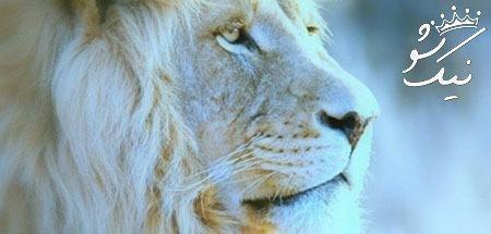 تعبیر خواب شیر ،خواب دیدن شیر جنگل