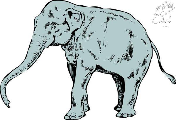 اولین حیوانی که در تصویر می بینید | تست روان شناسی