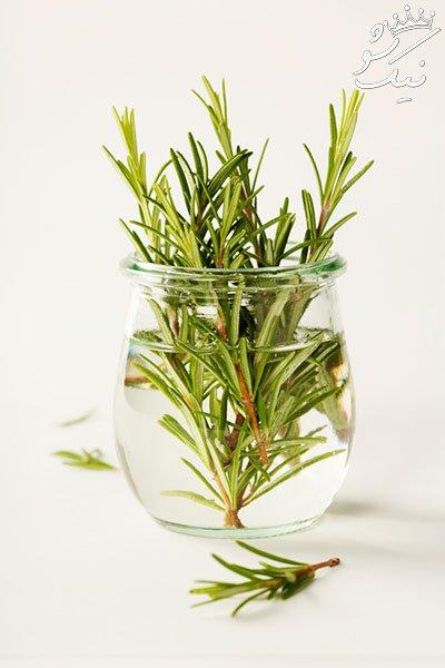 این 15 گل و گیاه فقط با یک لیوان آب رشد می کنند