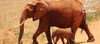 خواب فیل دیدن | تعبیر خواب فیل در خانه