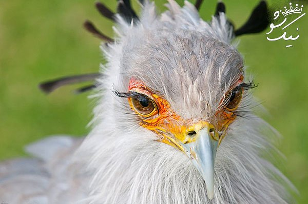 زیباترین حیوانات جهان که دوست دارید آن ها را تماشا کنید