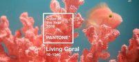 مرجانی رنگ سال ۲۰۱۹ از طرف پنتون معرفی شد