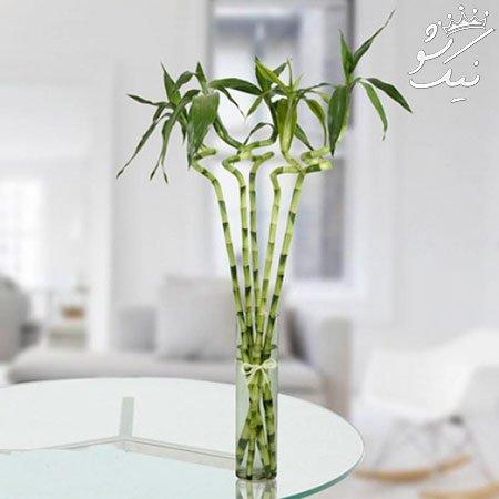 گل های آپارتمانی که نور کمی نیاز دارند