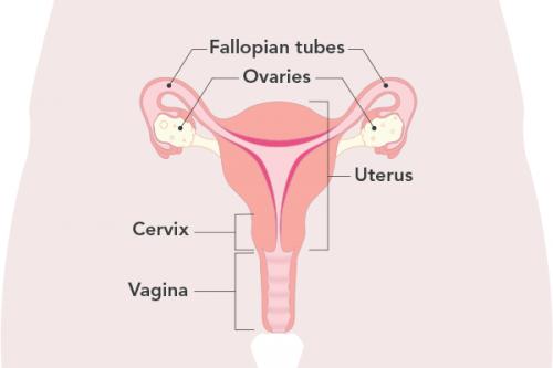 چند روز تاخیر در پریود نشانه بارداری است؟