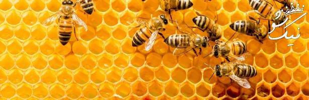 تعبیر خواب زنبورهای زیاد | نیش زنبور عسل