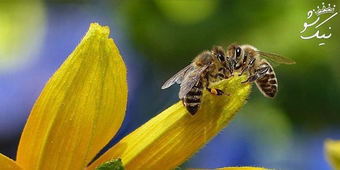 تعبیر خواب زنبورهای زیاد   نیش زنبور عسل