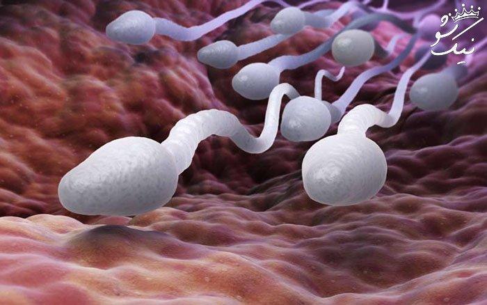 20 بهترین خوراکی ها برای افزایش اسپرم