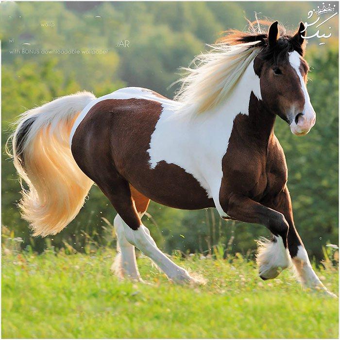 تعبیر خواب اسب | خواب دیدن اسب چه معنی دارد؟