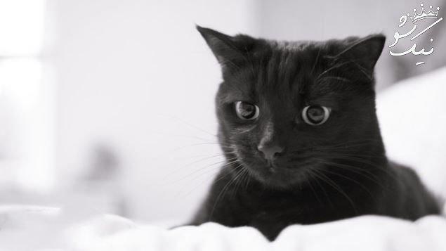 تعبیر خواب گربه | جسد گربه | زاییدن گربه