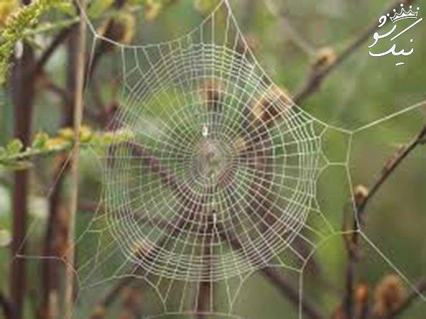 تعبیر خواب عنکبوت | تار عنکبوت | پریدن عنکبوت روی فرد