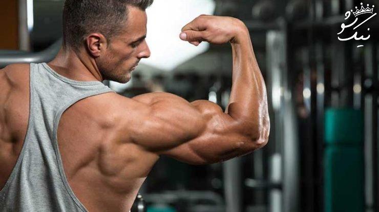 برنامه تمرین جلو بازو و پشت بازو | حجمی آرنولد