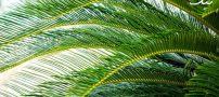 معرفی گیاهان آپارتمانی که هوا را تصفیه می کنند
