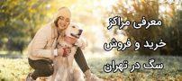 آدرس مرکز فروش سگ در تهران