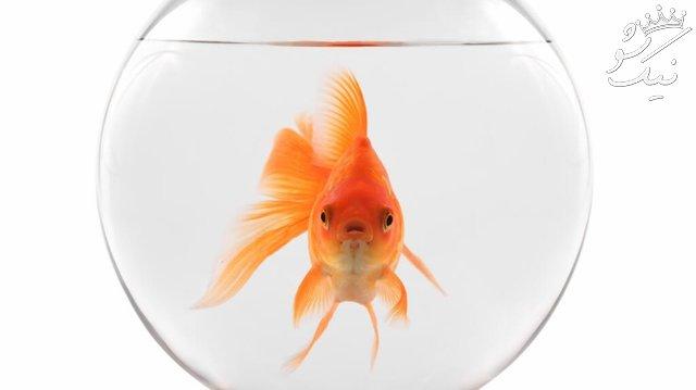 تعبیر خواب ماهی قرمز | ماهی گرفتن | ماهی مرده