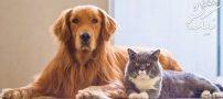 ۸ نکته مهم برای کسانی که حیوان خانگی دارند