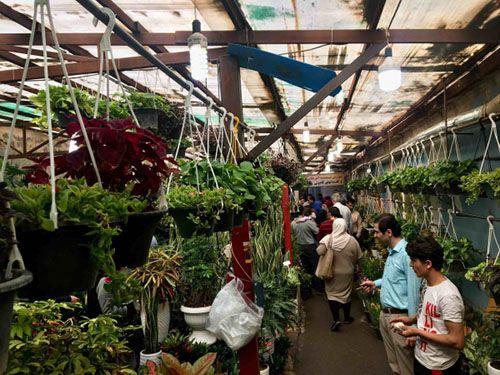 معرفی مراکز فروش گل و گیاه در تهران | بازار گل دائمی