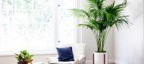 نخل کنتیا | گیاه آپارتمانی محبوب | معرفی و نحوه نگهداری
