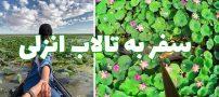 سفر به تالاب انزلی گیلان   لاله های زیبای مرداب انزلی