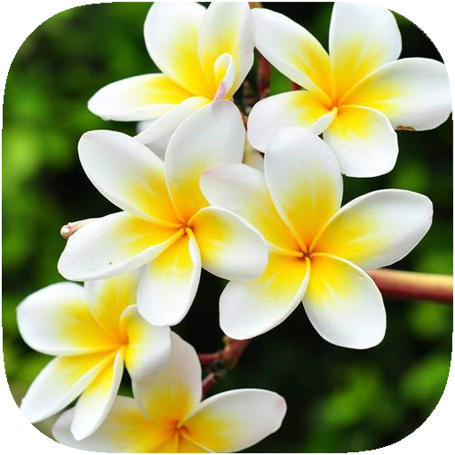 گل در فال قهوه نشانه چیست؟ تعبیر گل