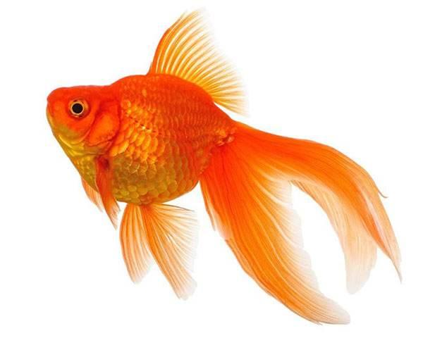 ماهی در فال قهوه به چه معناست؟ تعبیر ماهی