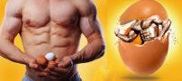 بعد از تمرین تخم مرغ کامل یا سفیده؟ میزان پروتئین سفیده تخمه مرغ