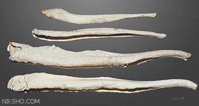 دلیل تحلیل رفتن استخوان آلت تناسلی مردان در طول زمان