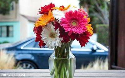 آموزش نگهداری از گل برای شادابی و تازگی آن ها
