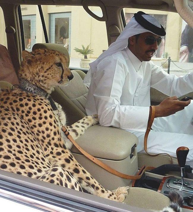 مکان های لاکچری که فقط در دوبی می توانید ببینید