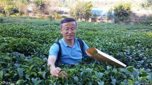 چرا مردم جهان دوست دارند بطور روزمره چای بنوشند؟