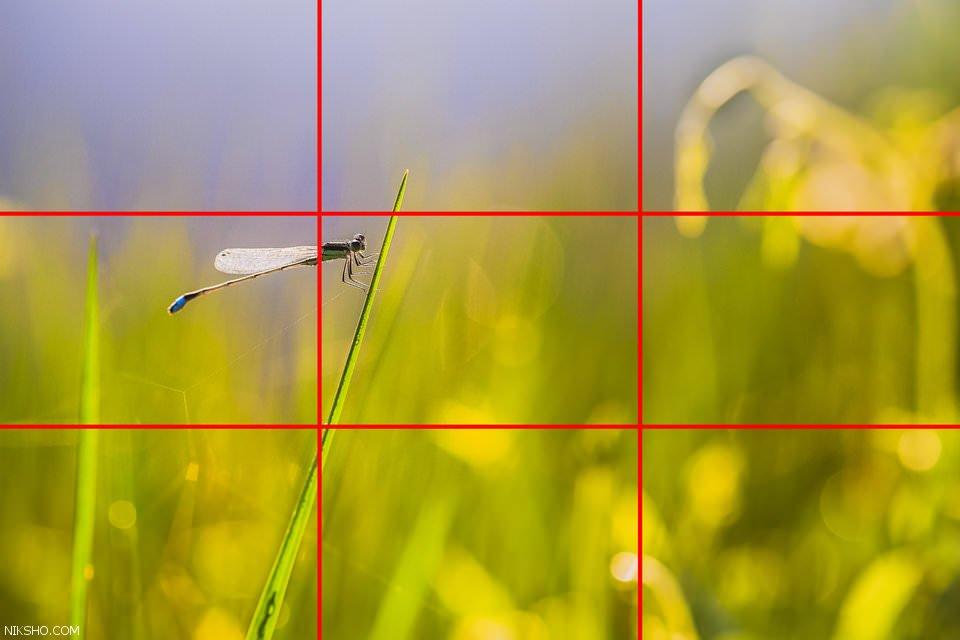 قانون یک سوم نکته حرفه ای در هنر عکاسی