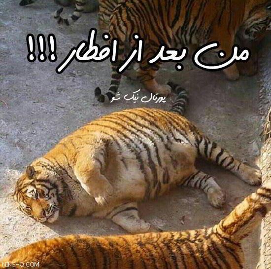 خفن ترین عکس های طنز و خنده دار روز