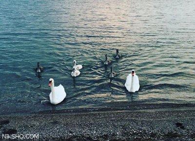 آزاده نامداری به تهران بازگشت +عکس کافه گردی