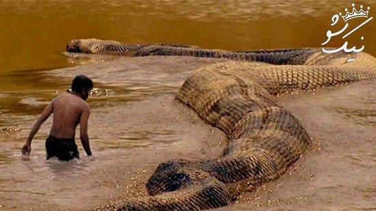 موجودات بزرگ و وحشتناکی که تاکنون دیده شده اند