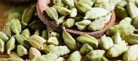 هل، دانه خوشبو و خوش رایحه سلامتی بخش
