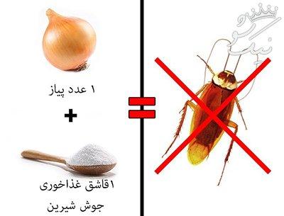 حشرات خانگی را به طور قطعی ریشه کن کنید