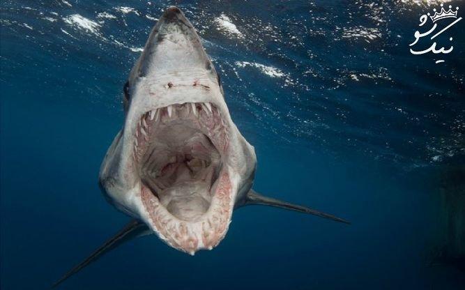 روش های مقابله با خطرناک ترین و ترسناک ترین حیوانات