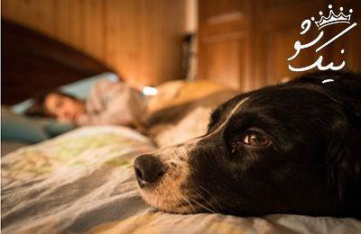 تعبیر خواب سگ ،سگ دیدن در خواب