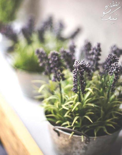 اضطراب را با گیاهان خانگی درمان کنید
