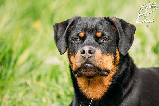 زبان بدن و معنی کارهای مختلف سگ ها را بشناسید