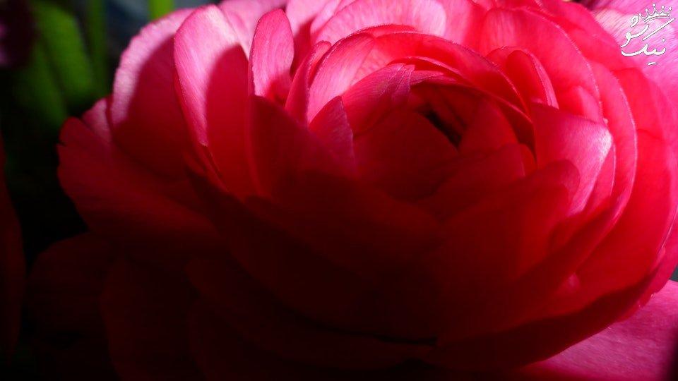 ۸ واقعیت جالب درمورد رحم و واژن زنان